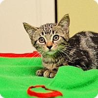 Adopt A Pet :: Toby - Oakland Park, FL