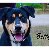 Adopt A Pet :: Betty - Daleville, AL