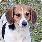 Adopt A Pet :: Polly B 21 lbs.