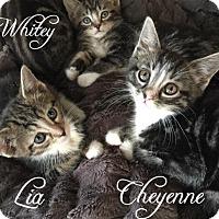 Adopt A Pet :: Whitey, Cheyenne & Lia - Island Park, NY