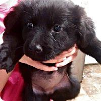 Adopt A Pet :: Trudy - Kimberton, PA