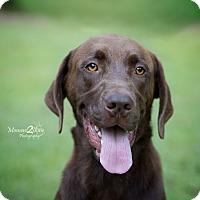 Adopt A Pet :: Snoop - Daleville, AL