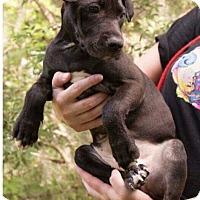 Adopt A Pet :: NaTasha - Hanover, PA