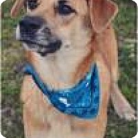 Adopt A Pet :: Browny - Ossipee, NH