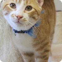 Adopt A Pet :: Isaiah - Mocksville, NC