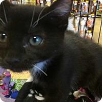 Adopt A Pet :: Ayla - Concord, CA