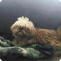 Adopt A Pet :: Patty - E. Wentachee, WA