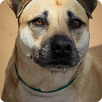 Adopt A Pet :: Sierra - Westminster, CA