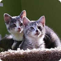 Adopt A Pet :: Rain - Cincinnati, OH