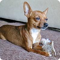 Adopt A Pet :: Here's Waldo. . . - Los Angeles, CA