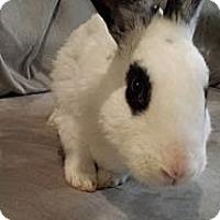 Adopt A Pet :: Cranberry - Conshohocken, PA