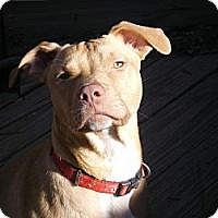 Adopt A Pet :: Rocket - Apex, NC