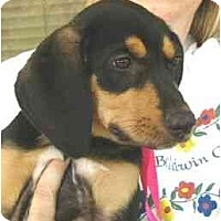 Adopt A Pet :: Sadie - Kingwood, TX
