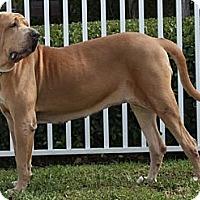 Adopt A Pet :: Fiona - Miami, FL