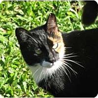 Adopt A Pet :: Delilah - Makawao, HI