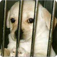 Adopt A Pet :: Faith - Cumming, GA
