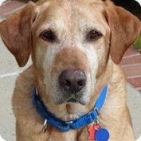 Adopt A Pet :: Maxx - Torrance, CA