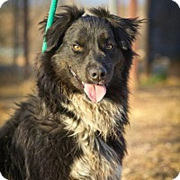 Adopt A Pet :: Teddy - Post, TX