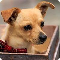 Adopt A Pet :: Austin - West Richland, WA