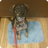 Adopt A Pet :: Bitsy - Savannah, GA