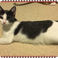 Adopt A Pet :: Flo - Mt. Prospect, IL