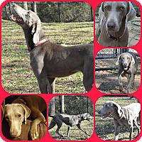 Adopt A Pet :: LENORE - Davenport, FL