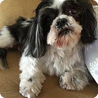 Adopt A Pet :: Jimbo - Las Vegas, NV