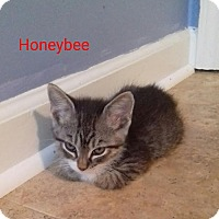 Adopt A Pet :: Honeybee - McDonough, GA