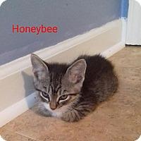 Adopt A Pet :: Honeybee - McDonough, GA