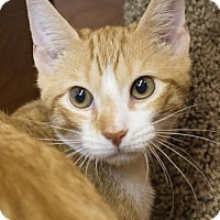 Adopt A Pet :: Jerry - Savannah, GA