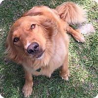 Adopt A Pet :: Sassy - New Canaan, CT