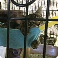 Adopt A Pet :: Jersey - Byron Center, MI