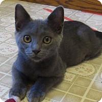 Adopt A Pet :: Dusk - Batavia, NY