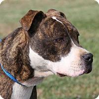 Adopt A Pet :: Sabrina (Spayed) - Marietta, OH