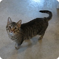 Adopt A Pet :: Wrangler - Geneseo, IL