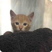 Adopt A Pet :: RALPHIE - Louisville, KY