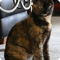 Adopt A Pet :: Simone - Rochester, MI
