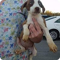Adopt A Pet :: Carol - Patterson, NY