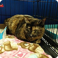 Adopt A Pet :: Liana - Avon, OH