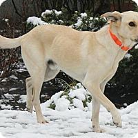 Adopt A Pet :: Pegasus - Mt. Prospect, IL