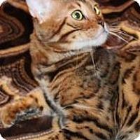 Adopt A Pet :: Golden Rule - Glendale, AZ