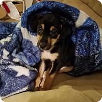 Adopt A Pet :: Maggie - Raleigh, NC