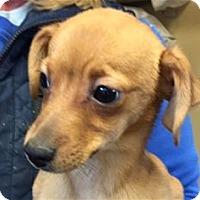 Adopt A Pet :: Cap'n Crunch - Pleasanton, CA