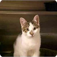 Adopt A Pet :: Tripp - Lombard, IL