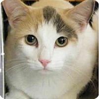 Adopt A Pet :: Tawny - Modesto, CA