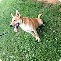 Adopt A Pet :: Rocky (located in NJ) - Cranston, RI