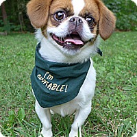 Adopt A Pet :: Pixie - Mocksville, NC