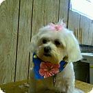 Adopt A Pet :: Juliet