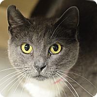 Adopt A Pet :: Mistery (@ Buzzy's) - Philadelphia, PA