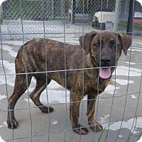 Adopt A Pet :: Nigel - Manning, SC